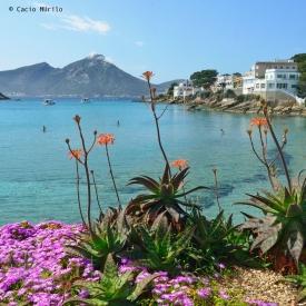 _CMV3128 fotografo Mallorca Espanha trok