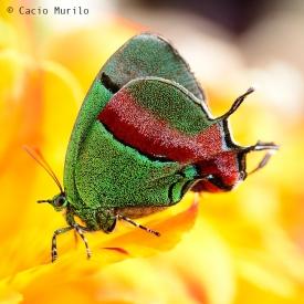 _CMV7210-forweb-borbo-face-nome--Cacio-Muriloface-borbo_--Cacio-Murilo