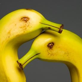 Fauna-Vegetal-Banana-site-mar15-Foto--Cacio-Murilo