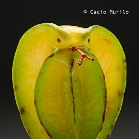 Fauna-Vegetal07-forwebinsta-www.caciomurilo