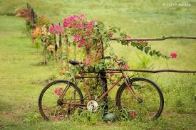 _JV19041 mar 15 PEDRA DA BOCA_bicicleta trok chuva Foto CacioMurilo